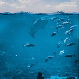 madewithpicsart editedbyme ocean fishtank