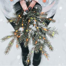 unsplash holiday christmasbrushes freetoedit