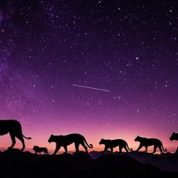 freetoedit lion lioness silhouette nightsky