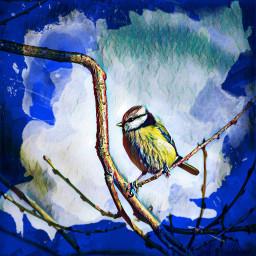 freetoedit nature bird