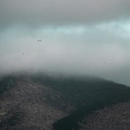 freetoedit nature hills cloudysky seagullsinflight