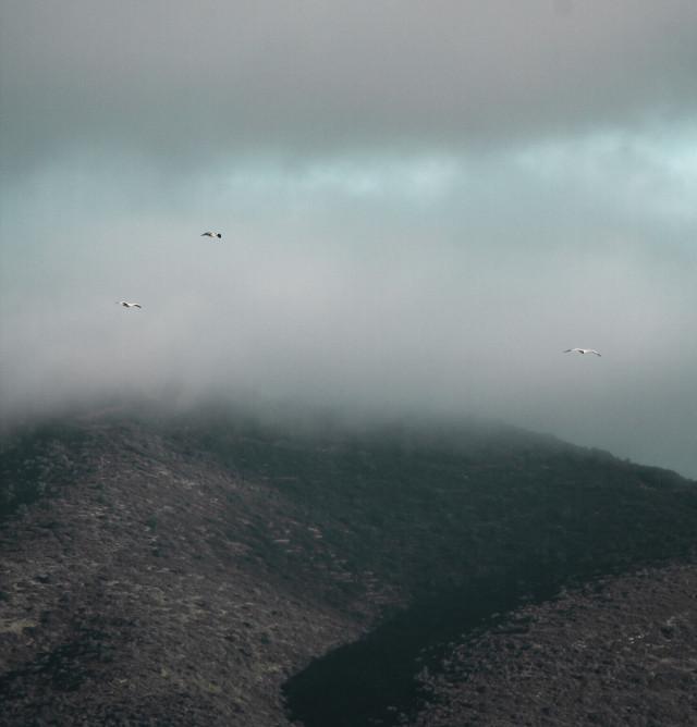 #freetoedit  #nature #hills #cloudysky #seagullsinflight #naturephotography