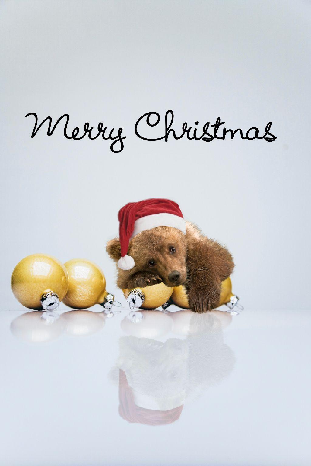 #freetoedit #merrychristmas #picsart #bear #christmas