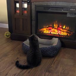 pcanimaladventures animaladventures cat watchingtv