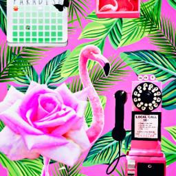 pink flamingo payphone pinkflower pinkpinkpink freetoedit