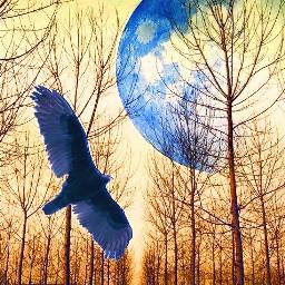 freetoedit moonrise nightwing forestroad blueandgold