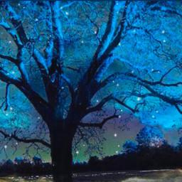 freetoedit wintersnight fullmoonbright starz treesilhouette