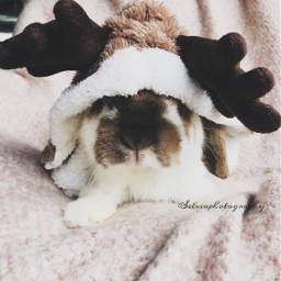 rudolfrendier rendier cute bunny bunnystagram