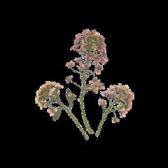 flowers png pngsticker tumblr arthoe freetoedit