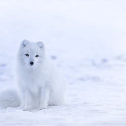 snow winter animal animals freetoedit