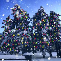 freetoedit christmastrees christmastree holidays christmas