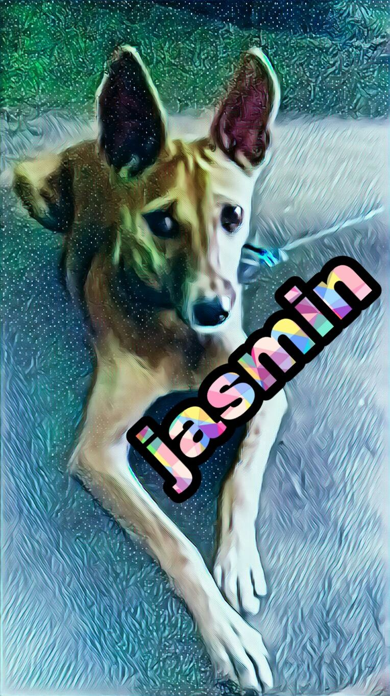 Nithis jasmin
