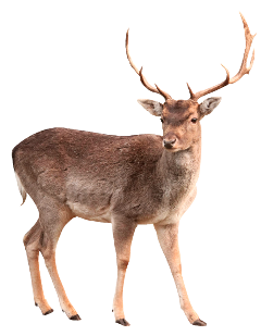 deer petsandanimals animal animals forest freetoedit