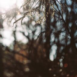 35mmfilmphotography