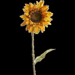 sunflower aesthetic yellow tumblr arthoe