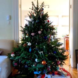 pcchristmastrees christmastrees freetoedit tree festive