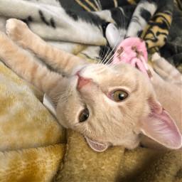 newaddition newcat adoptedcat adopted sheltercat