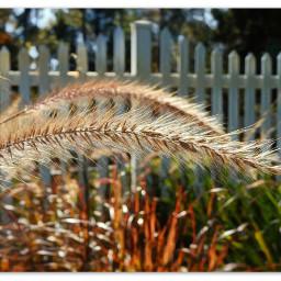 myphoto grasses garden paint bordered