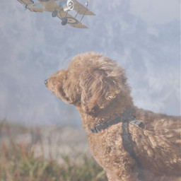 freetoedit puppy sky plane ballerina