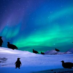 ircskyloversdelight skyloversdelight freetoedit penguins antarctica