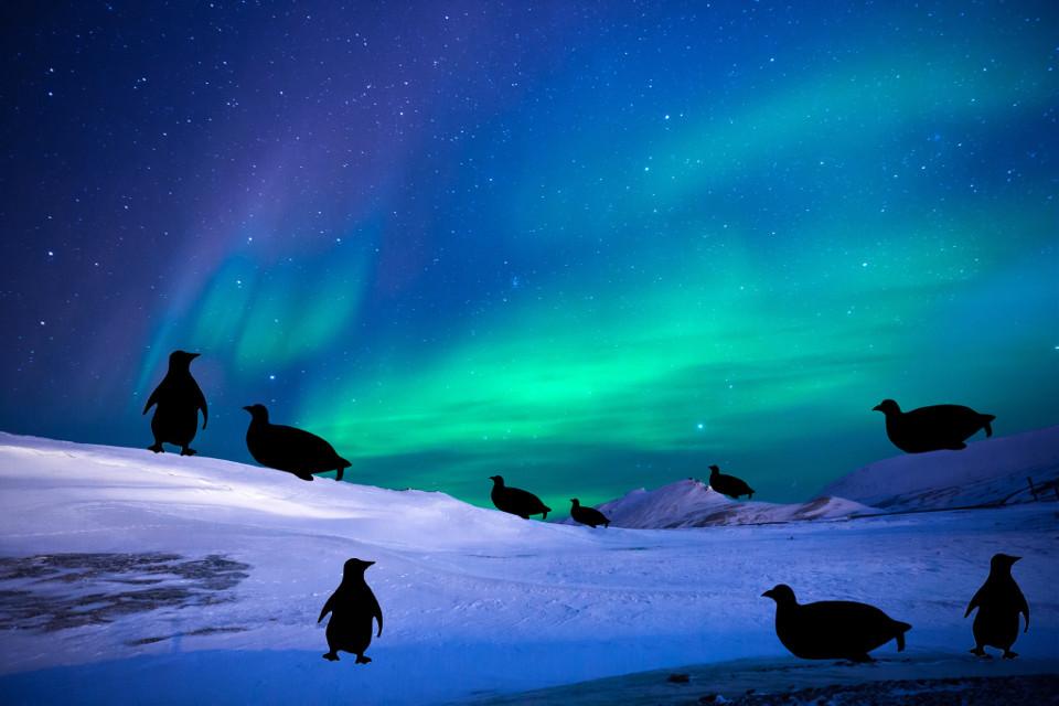 #freetoedit #penguins #antarctica