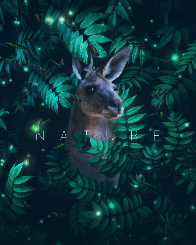 #ANIMAL series #Kangaroo time #nature #texture #art #