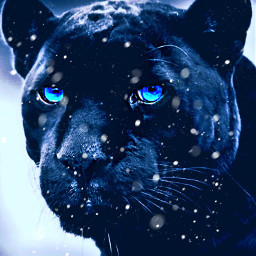 freetoedit panther animals cold everything