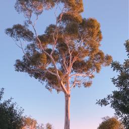 pctree nature tree wildplants morningsunriselight freetoedit
