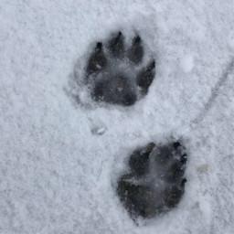 pcsnow snow photography photochallenge dog