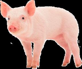 猪 freetoedit