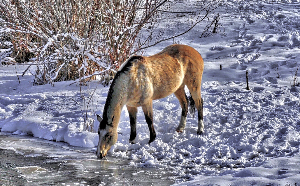 IceBreaker #AngelEyesImages#landscape#instagram#instagramers#instagrammers#picsart#picsartist#picsartists#picoftheday#nikon#nikonus#nikonusa#nikond5300#canon#canonus#canonusa#travel#traveler#traveling#travelphotography#horse#horses#snow#winter#beautifullandscape#stream#river#snowscene#winterscene