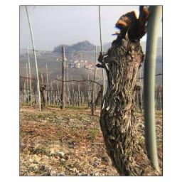 freetoedit barolo wine italy happynewyear