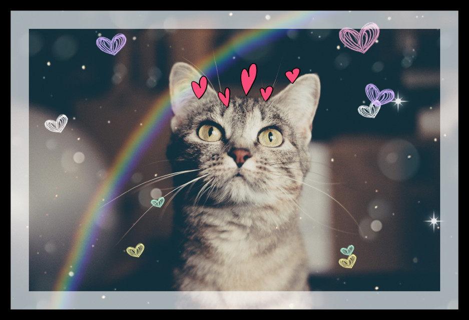 #edit #polshgirl #Cat love 🤩😺 #my first edit