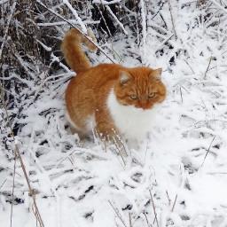 cat winter 2019 snow freetoedit