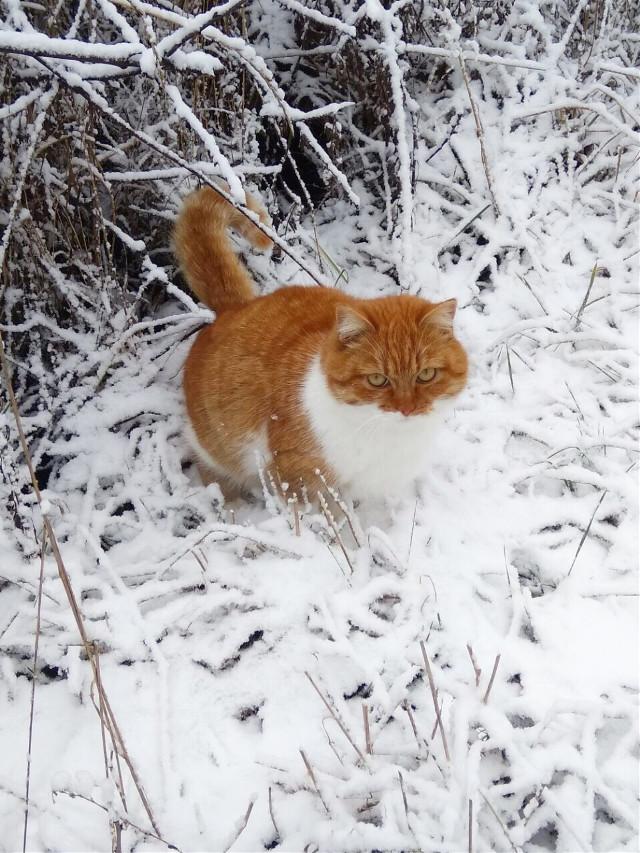 #cat #winter #2019 #snow #freetoedit