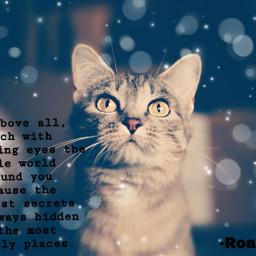 irchappymeowyear happymeowyear cat roalddahl freetoedit