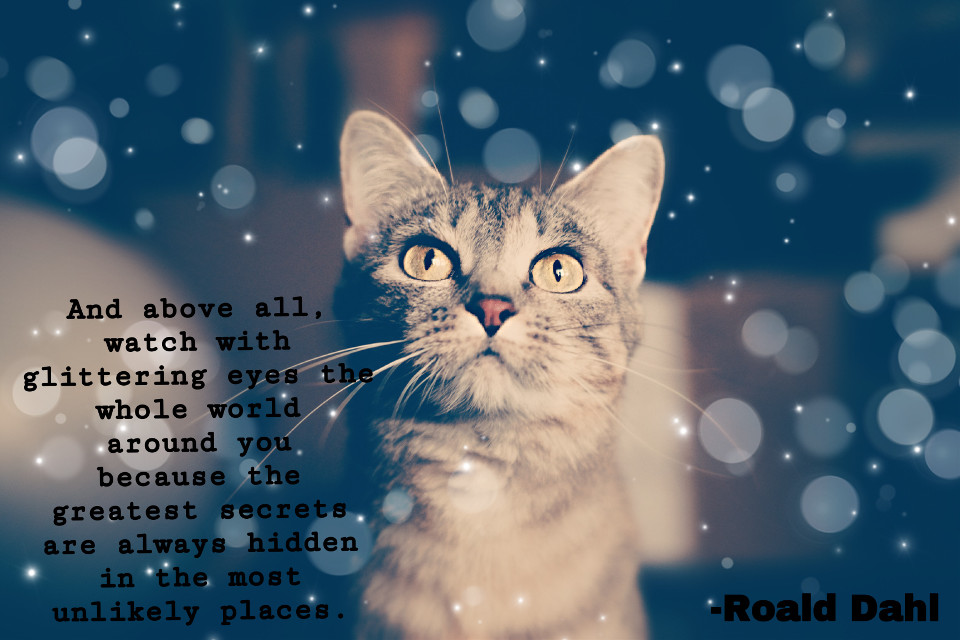One of my favorite authors. #cat #roalddahl