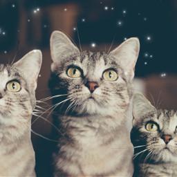 irchappymeowyear happymeowyear freetoedit cat cats