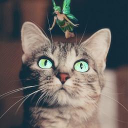 irchappymeowyear happymeowyear freetoedit greeneyes kitty