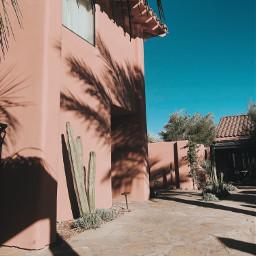 palmsprings desert palmtree shadows shadowplay freetoedit