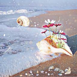 freetoedit fantasy sea seashells