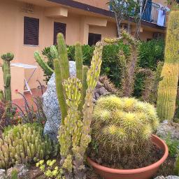 italia cactus