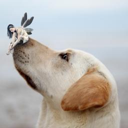 freetoedit dog fairy