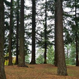 trees naturephotography freetoedit
