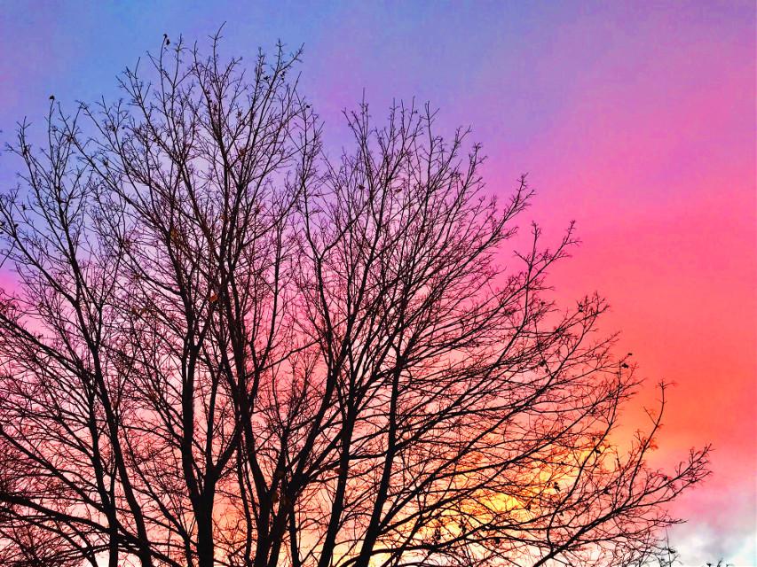 Sunset on my winter walk! - - #myphotography #winter #sky #sunset #beautiful #pcpink #pink