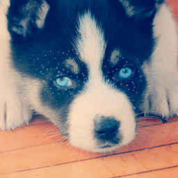 freetoedit doggie puppy