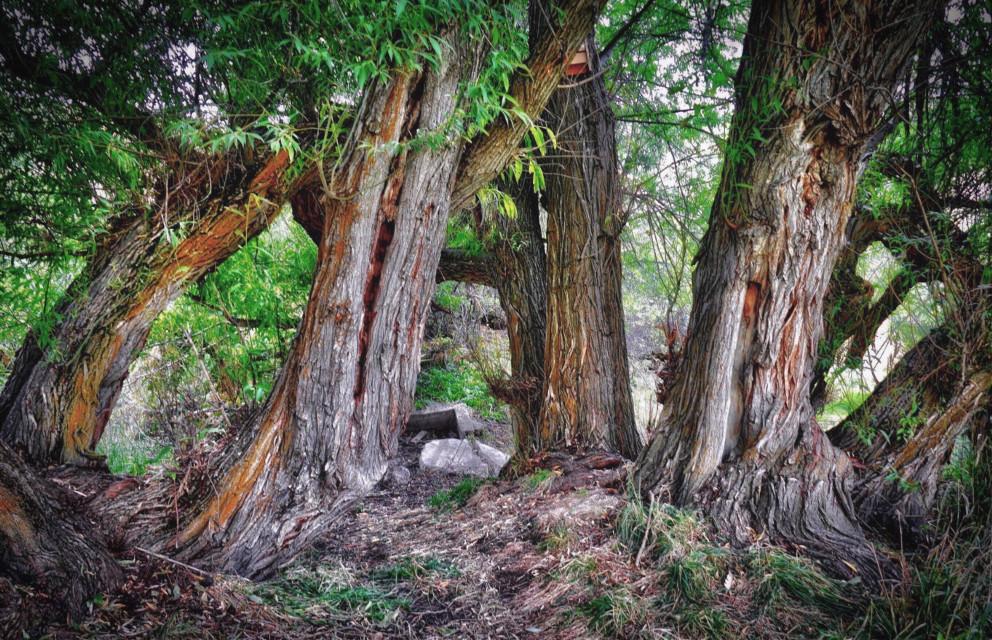 Grover #AngelEyesImages#instagram#instagrammers#instagramers#picsart#picsartist#picsartists#picoftheday#nikon#nikonus#nikonusa#nikonphotography#nikond5300#canon#canonus#canonusa#travelphotography#trees#tree#travel#traveling#traveler#beautifullandscape#forest#woods#lumix#lumixus#lumixusa#