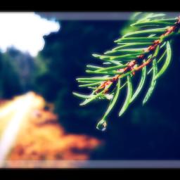 nature beauty naturelbeauty