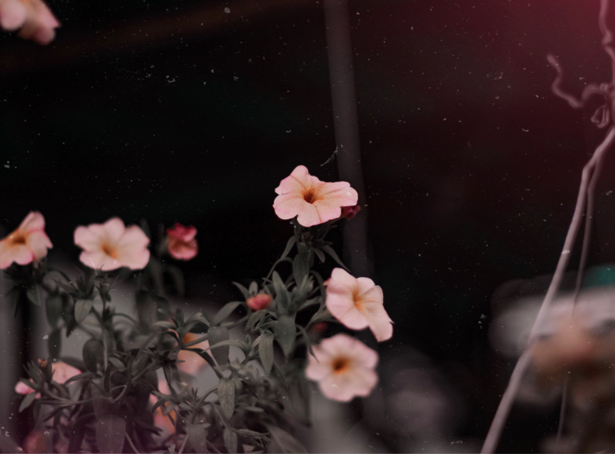 #freetoedit #naturephotography #naturesbeauty #flowerslovers #flowersfollower #flowerstagram #flowerstyles_gf #naturelover #naturephotograpy #naturephoto #picsartphoto #picsartedit #naturefreetoedit