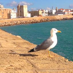 freetoedit seagull cadiz spain colors pcmyview